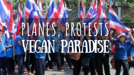 Planes, Protests, Vegan Paradise featured image