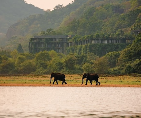 A view from the banks of Kandalama Tank with elephants in the foreground.