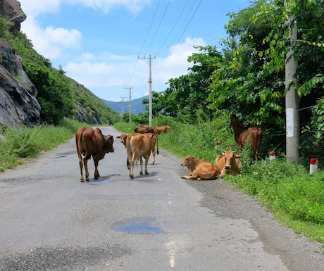You're more likely to see cows than other traffic.