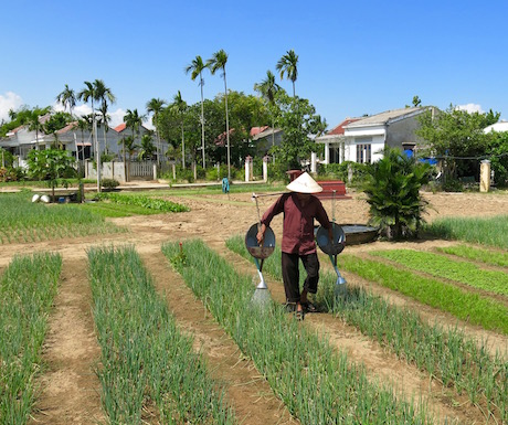Local vegetable gardens in Hoi An.