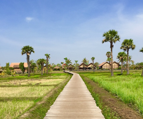 Raised walk way through the lemon grass and rice paddies.
