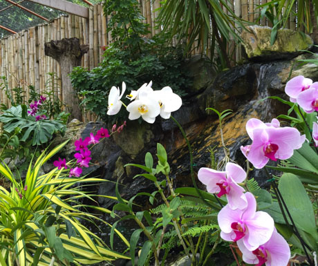 Beautiful orchid garden at Kurumba Maldives.