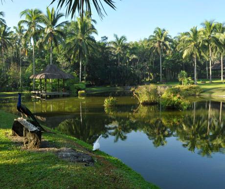 peacock, lake and coconut palms at The Farm at San Benito