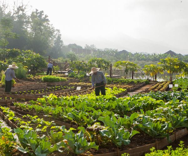 The organic garden at Sanctum Inle Resort