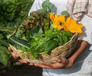 Fresh vegetables from the organic garden at
