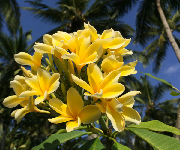 Tropical flowers at Diamond Beach Villa