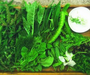 Soneva Fushi - Shades of Green 1