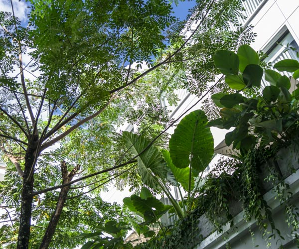 Treeline Courtyard 1